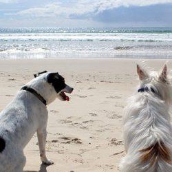 Vacaciones?, junto al perro es mejor!