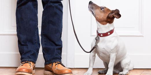 perro-en-casa-consejos-para-duenos-primerizos-522×261