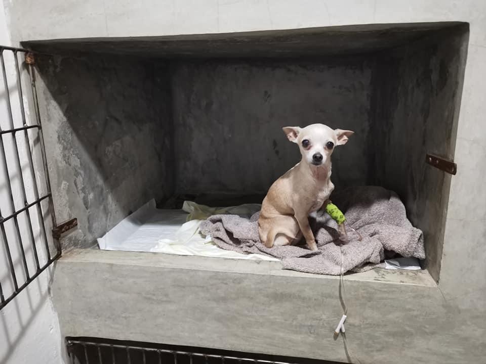 jaula con perrito